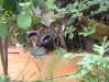 Ambiente - Escorrentías Pluviales: Basura en el Río Bayamón