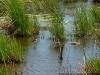 Ambiente - Escorrentías Pluviales: Cuerpo de agua