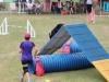 Canino relizando deporte de obstaculos