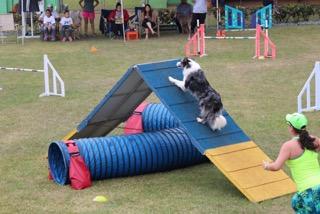 Uno de los perros de la Competencia canina en su corrida