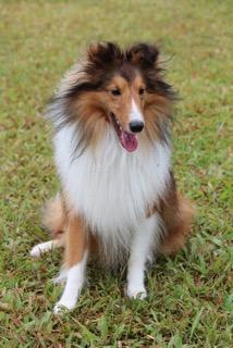 Perro participante de la competencia caninca