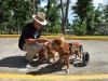 Perros participantes del Curso de Obediencia Canina
