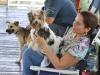 Perror participanter del Curso de Obediencia Canina