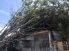 Tala, limpieza y recogido de árboles caídos