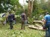 Tala, limpieza y recogido de árboles caídos en las calles