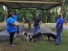 Matricula clases caninas-2.jpg