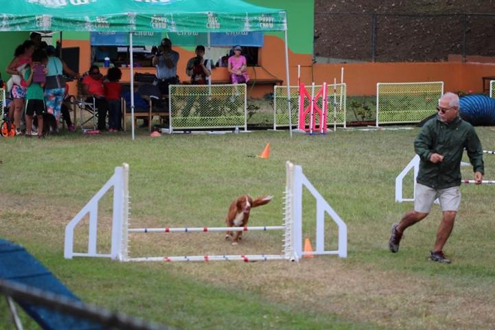 competencia canina