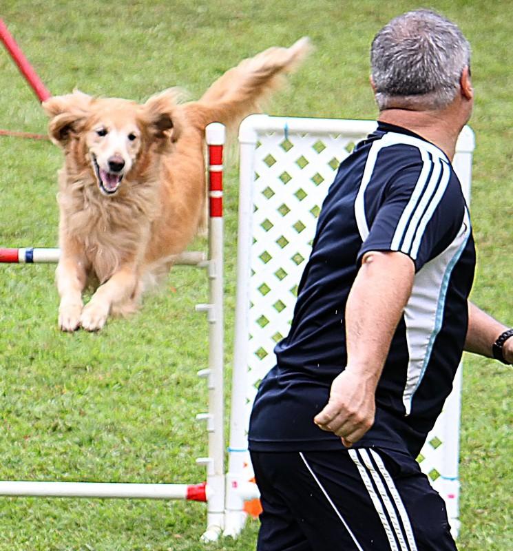 agilidad canina
