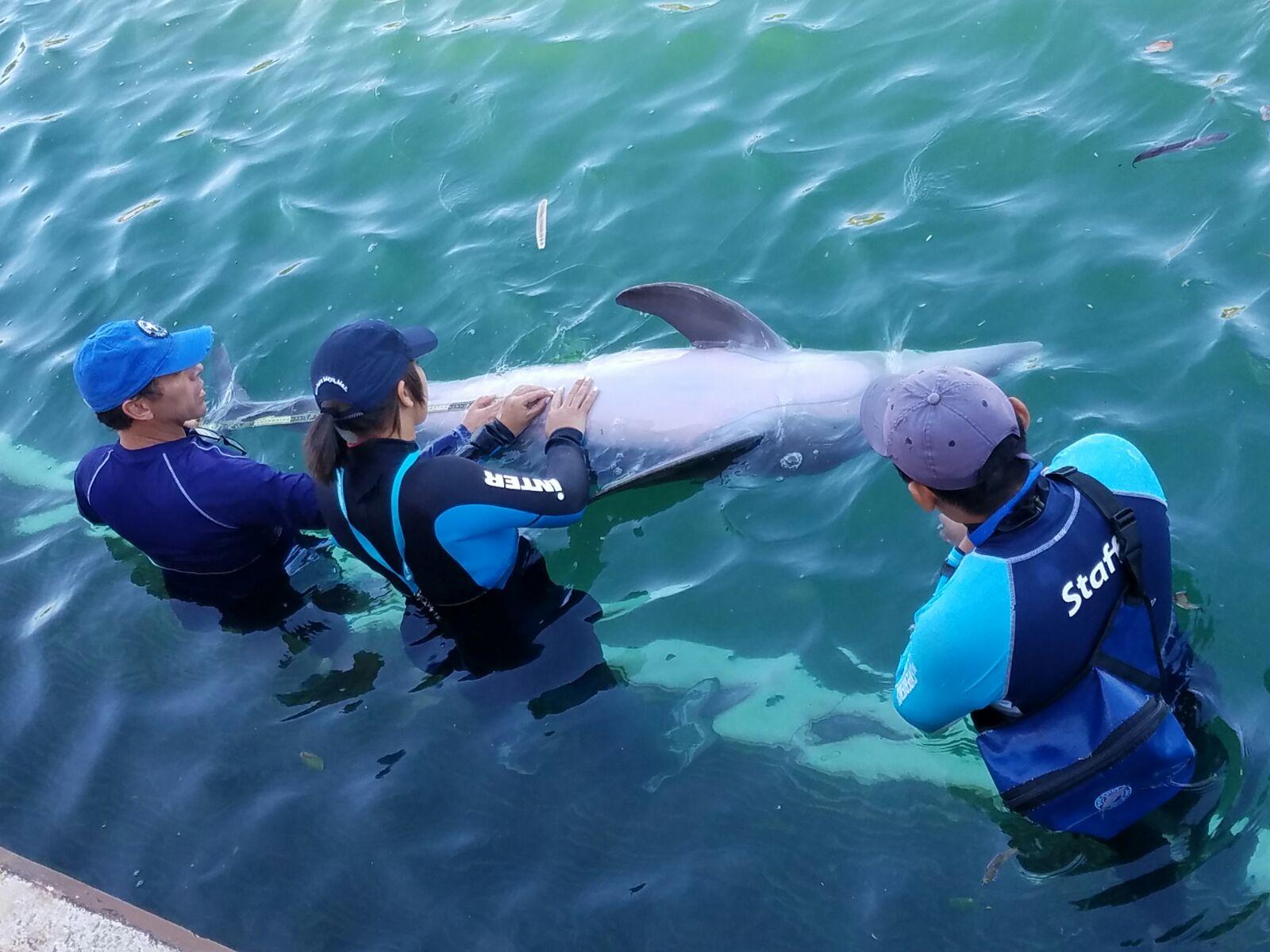 Estudiantes de Bayamón Realizan Investigación con Animales Marinos en Dolphin Discovery