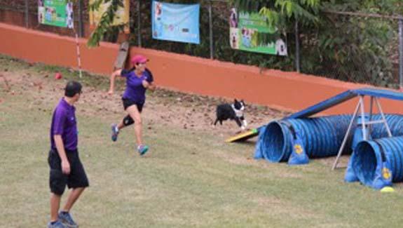 Bayamón Impulsa el Deporte Canino
