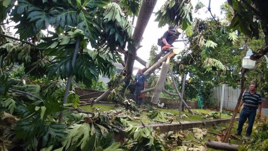 Recogido de material vegetativo en Bayamón