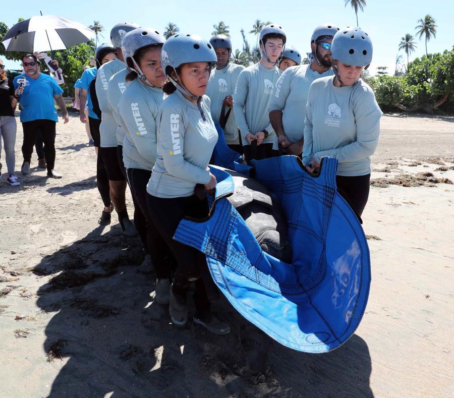 El Centro de Conservación de la Inter de Bayamón liberó al Manatí Aramaná