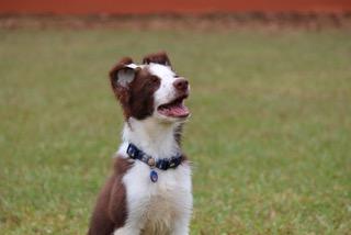 Obediencia canina en Bayamón
