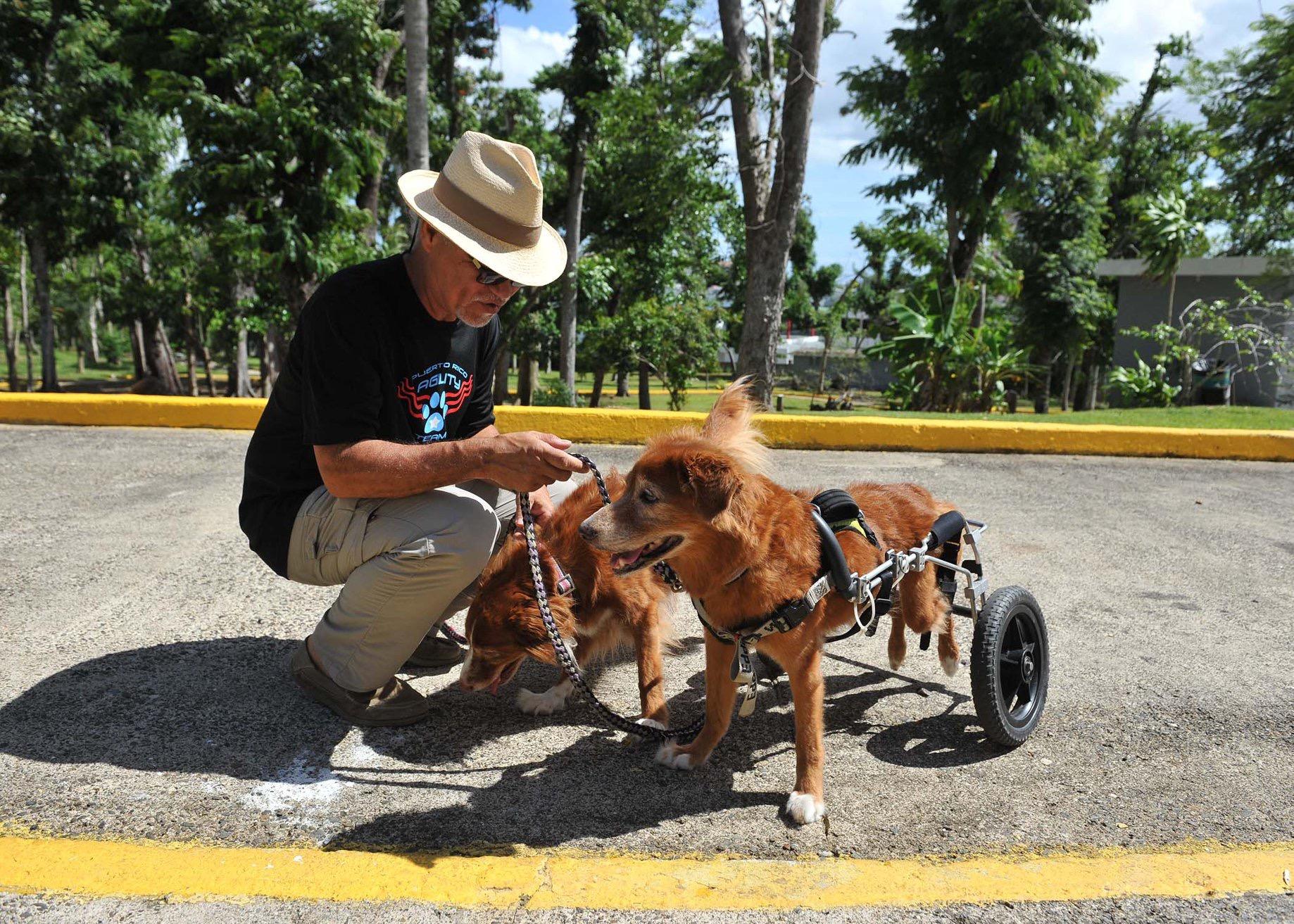 "Participantes de ""Obediencia Canina"""