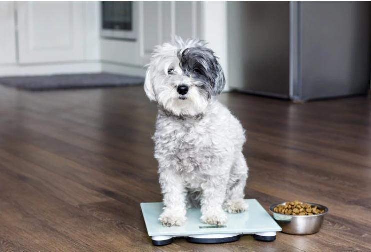 Consejos Sobre el Cuido de Mascotas en Cuarentena