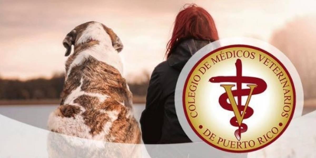 Colegio de Médicos Veterinarios aclara dudas sobre animales y el coronavirus