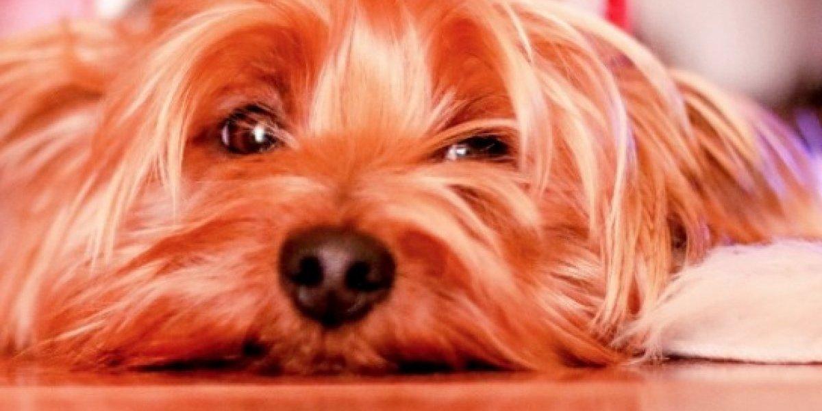 Recogerán Animales Maltratados o Realengos en la Región de Bayamón