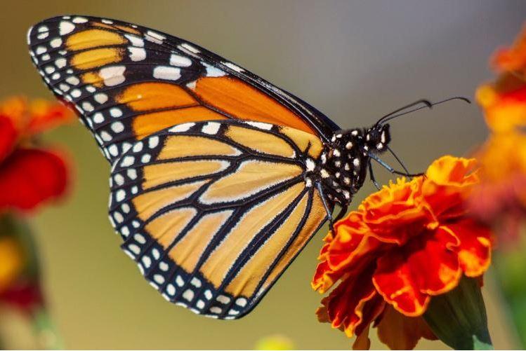 Llaman a la Población a Participar en Censo Virtual de Especies y Biodiversidad