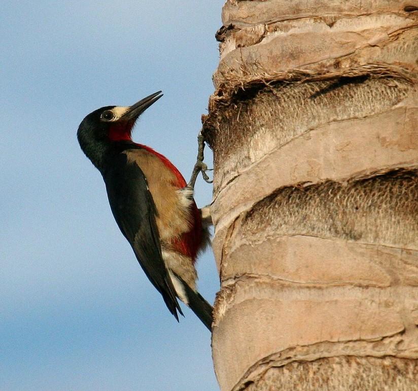 El Centro Ambiental Santa Ana Exhorta al Público a Censar las Aves Endémicas con la Ayuda de Aplicaciones