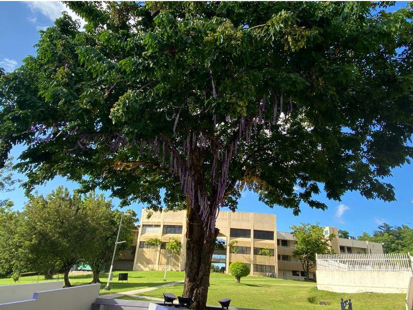 Universidad Central de Bayamón Celebra su Primera Graduación Presencial y sus 60 Años de Historia