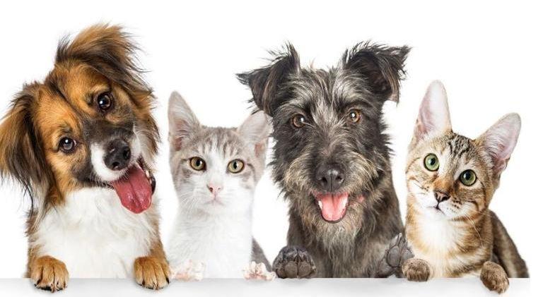 Supermercados Econo Lanza Tour de Vacunación de Mascotas a Bajo Costo